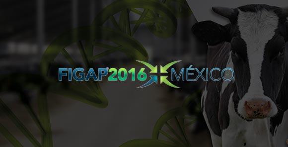 FIGAP EXPO 2016